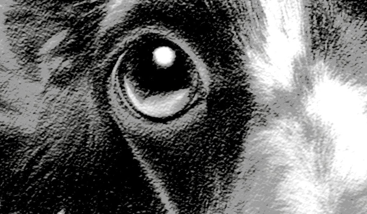 Daschund pup photographic detail