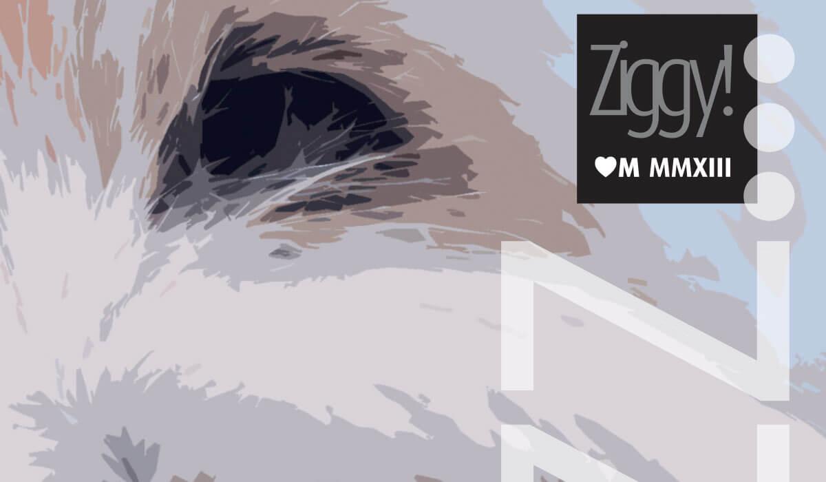 Ziggy Detail
