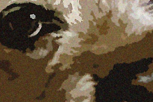 Boarder Terrier Mounted Prints