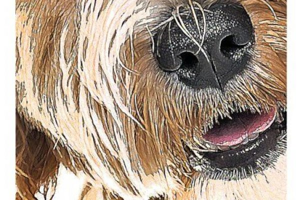 Graphic Print Detail of Labradoodle