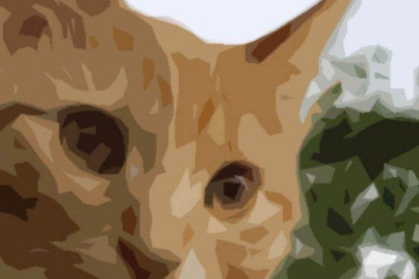 Graphic Print of Cat