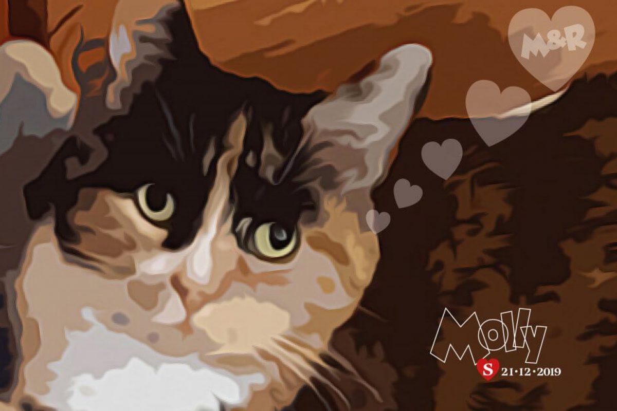 Molly the shy Cat