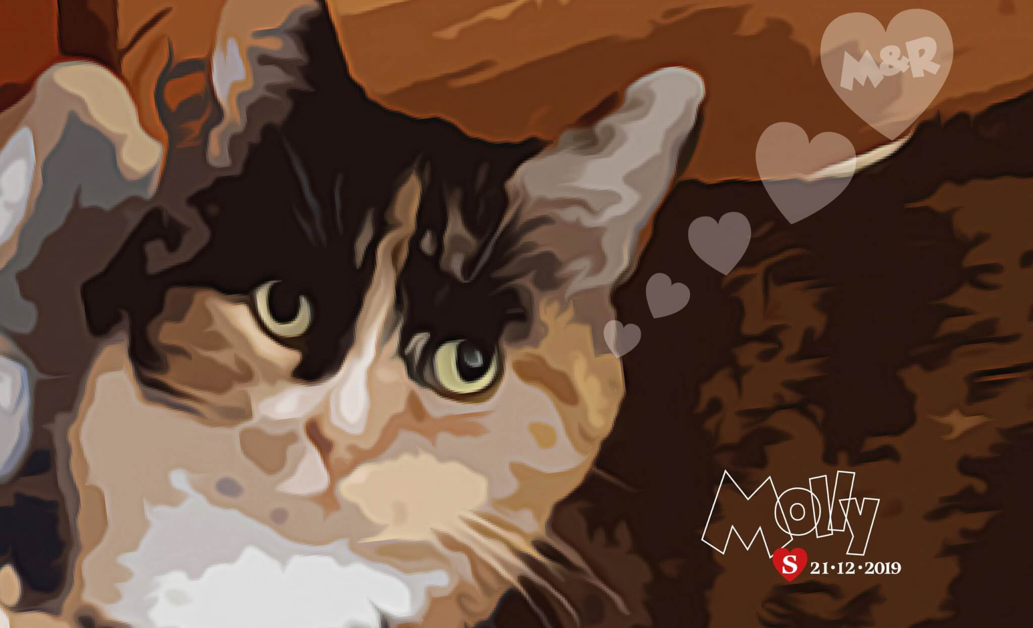 'Molly' a very shy Cat, who only has eyes for Melissa & Rob!