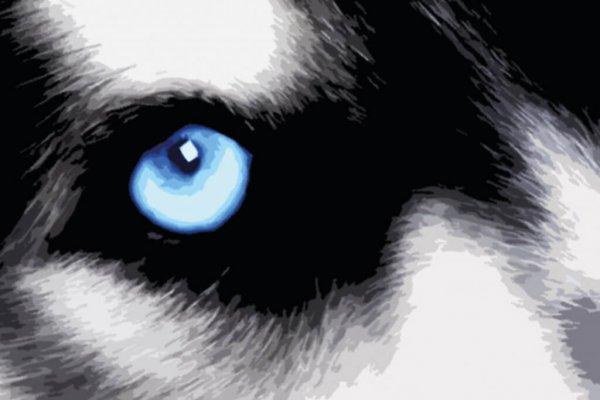 Graphic Print Siberian Husky