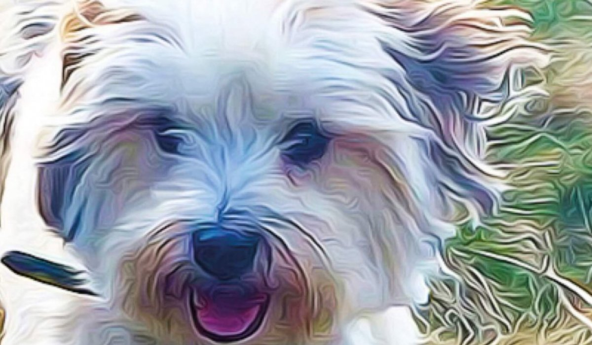 Teddy Terrier Graphic