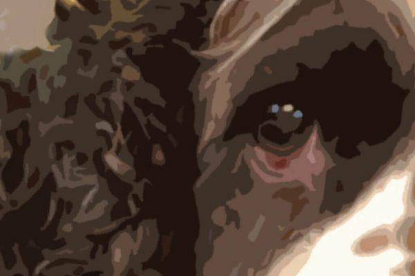 Large Graphic Pet Dog Print s